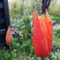 Palmer, junglen, regnvandsbed og bananplantage