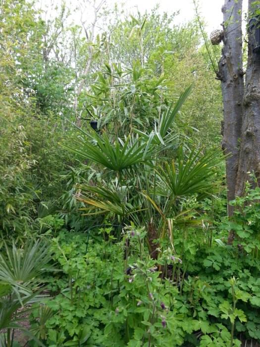 Jungle med flere hørpalmer og 5 forskellige bambus arter © iminhave.dk