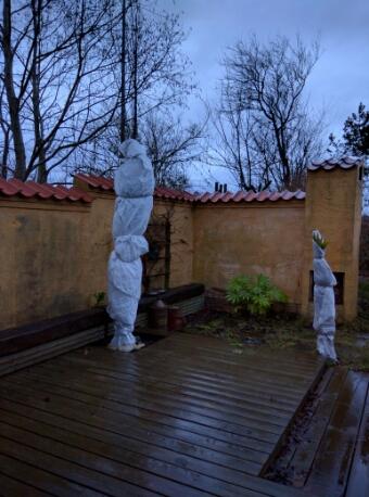 vinterbeskyttelse af palmer © iminhave.dk