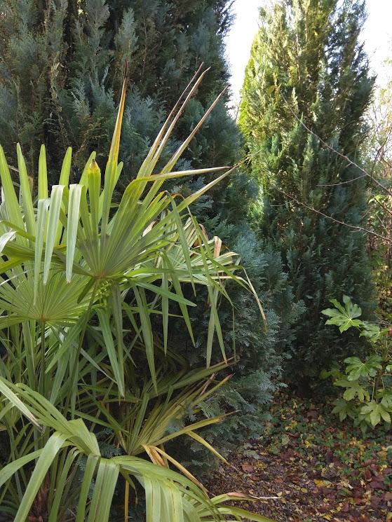 eksotisk hele året med palmer og stuearalie der er ret hårdføre og stedsegrønne © iminhave.dk