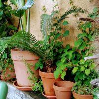 3 Eksotiske planter til samlet 100 kr. der kan plantes ud i din danske have