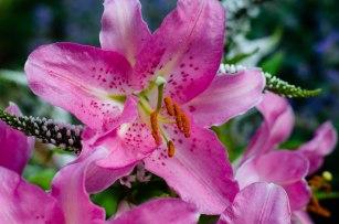 summer flowers 028
