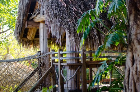 Tree house in a tropical jungle.