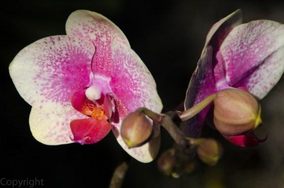 20150127-Botanical garden 130
