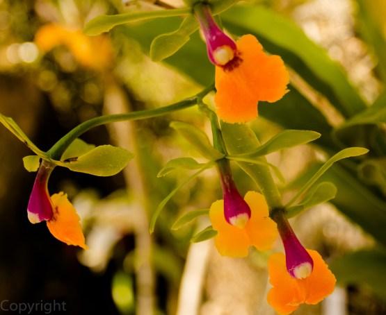 20150210-Botanical creatures 365