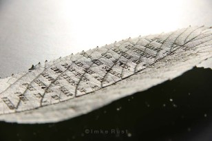 While photographing the leafs the sun reflected so strongly, that it made the leaf appear to be black&white...