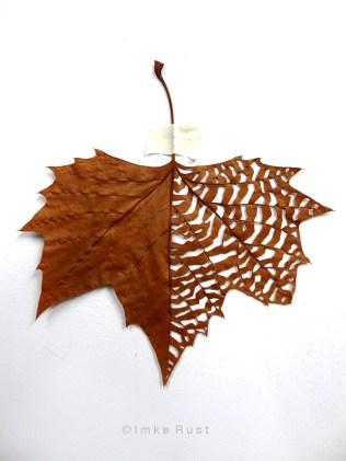 Maple leaf cut-out #2