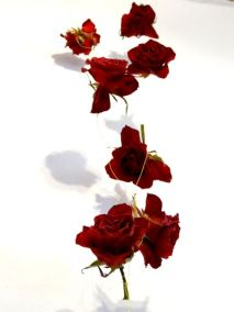 Making a rose garland from dried roses instead of discarding them after they did not look good in the vase anymore.