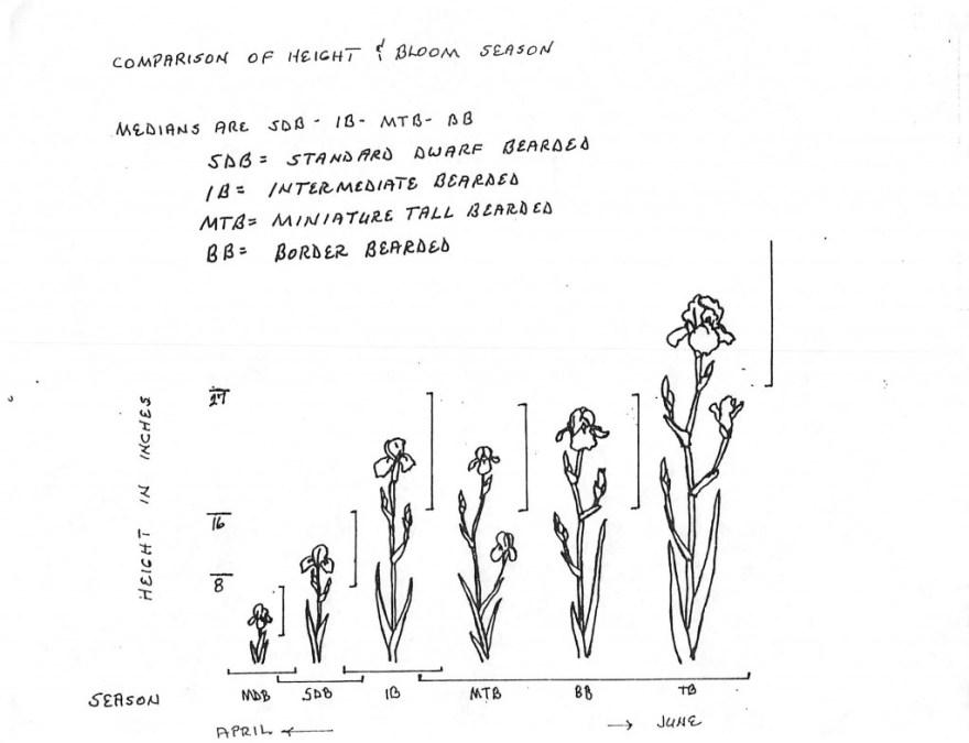 Iris Comparison of height & Bloom Season