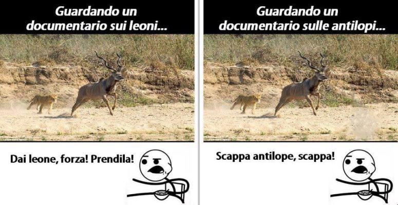 Guardando un documentario sulle antilopi e sui leoni