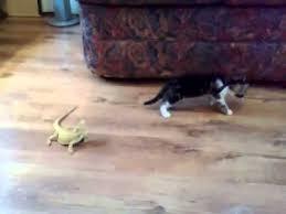Curiosity Was Framed; Lizards Did It