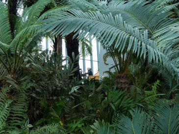 Sky Garden Dschungel