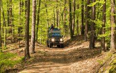 Inselsafari Fahrt im Wald