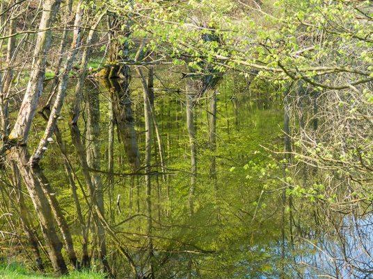 Inselsafari - Wasserspiegelung der Bäume