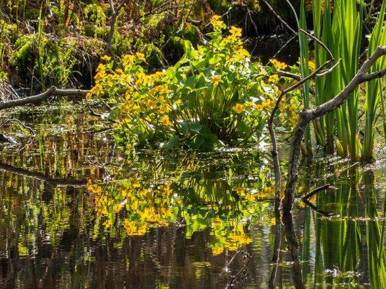 Inselsafari - Sumpfpflanze