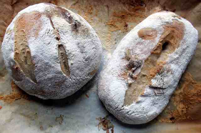 liquid sourdough starter loaves