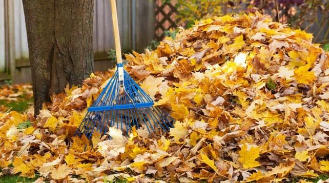 Les feuilles d'automne sont si utiles