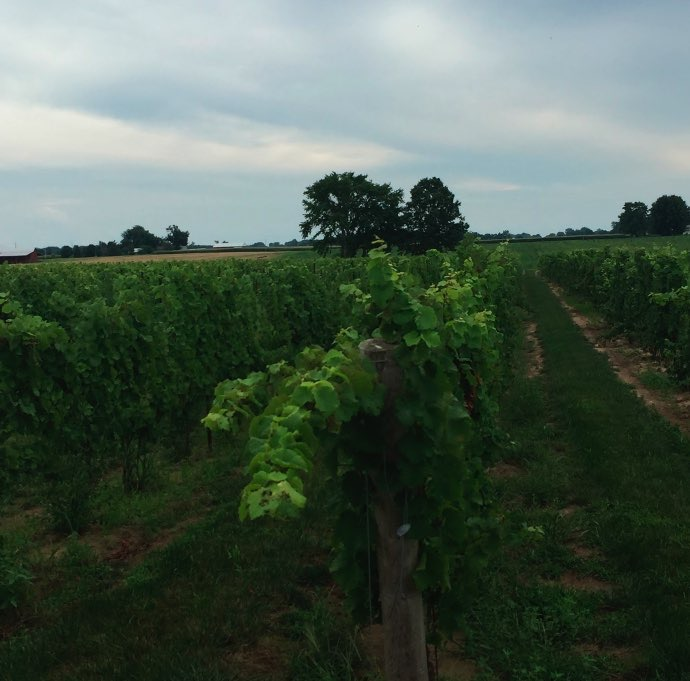 coopers_Hawk_Vineyard