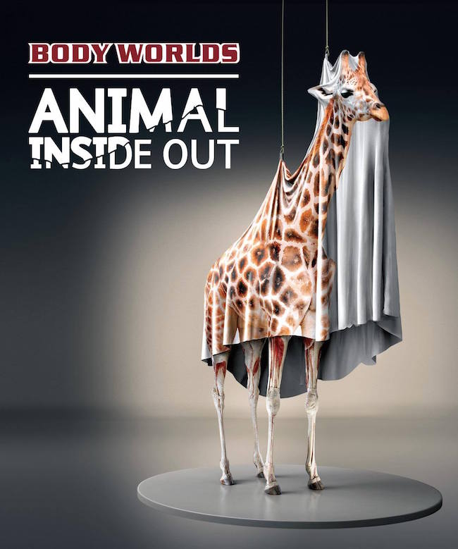 animal-inside-out-poster