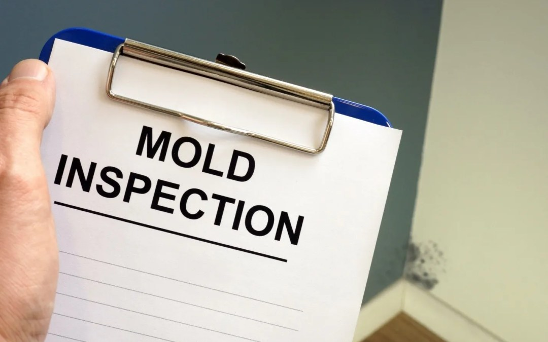 5 Essential Components of a Professional Mold Inspection
