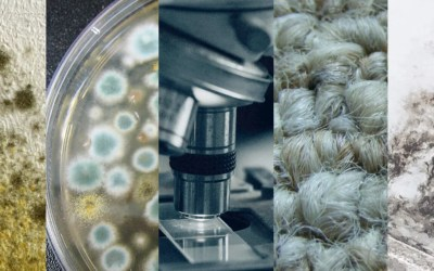 What is the best way to test for mold? We compare 5 methods.