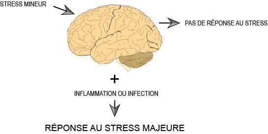 Stress et inflammation
