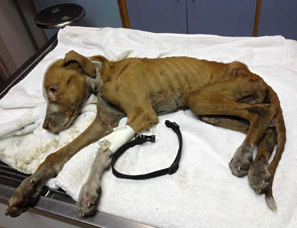 Image result for report animal abuse US