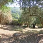 Monchique plot for sale