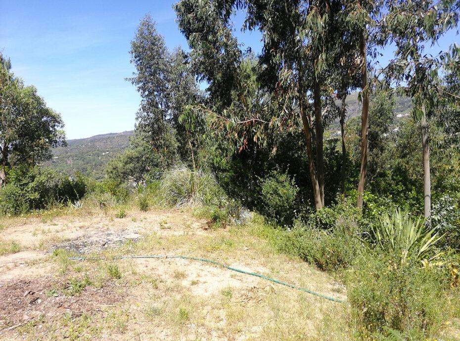 Land Monchique for sale