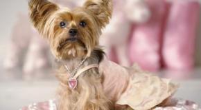 Mascotas Fashion