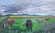 Dunsinnan Highland cattle sm