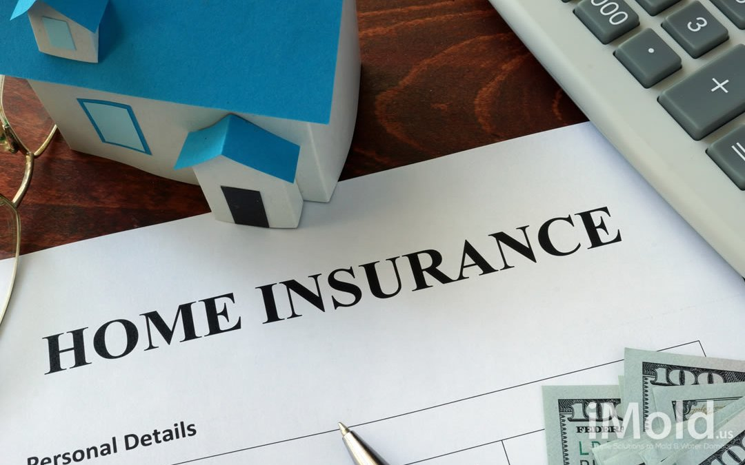 Will My Homeowner Insurance Cover Mold?