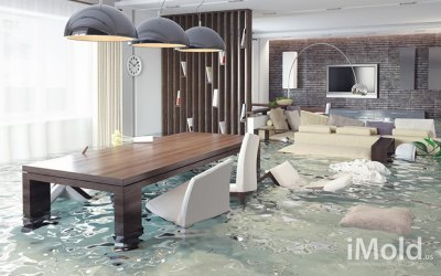 Everything you need to know about water damage restoration