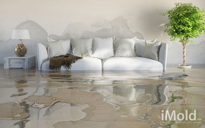 3 Reasons You Need Water Damage Restoration in Port Charlotte, FL