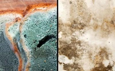 Mold on Food Vs. Mold on Walls