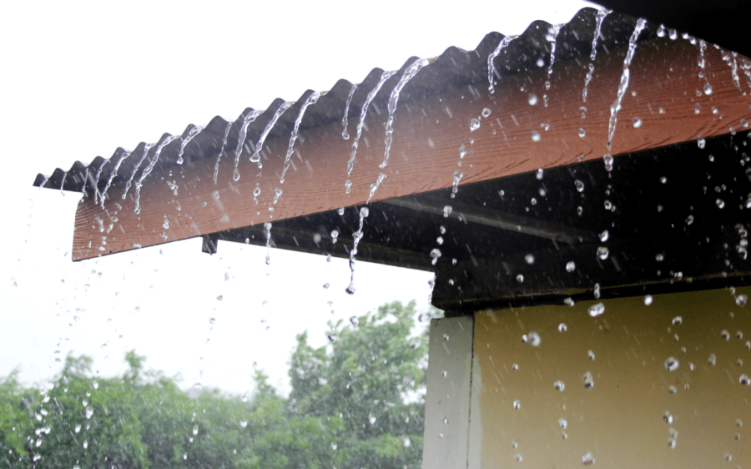 Rainy Season Brings Mold to Florida Homes