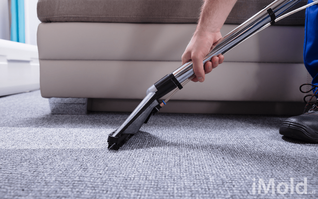 6 Reasons to Have Your Carpets Professionally Cleaned