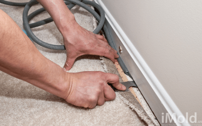 How Dangerous Are Moldy Carpets?