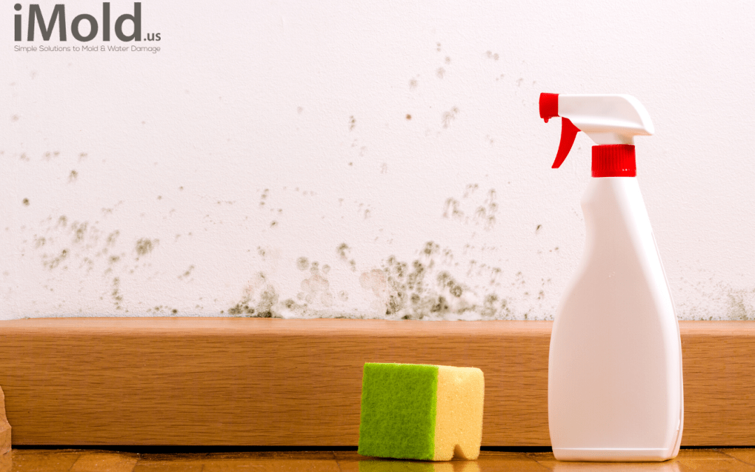 4 Common Signs of Mold in Your Florida Home
