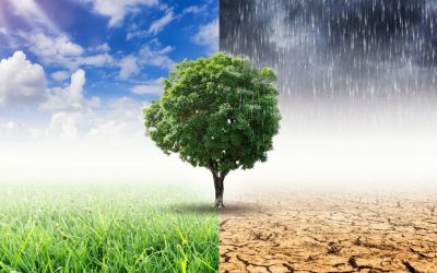 How Climate Affects Mold Growth