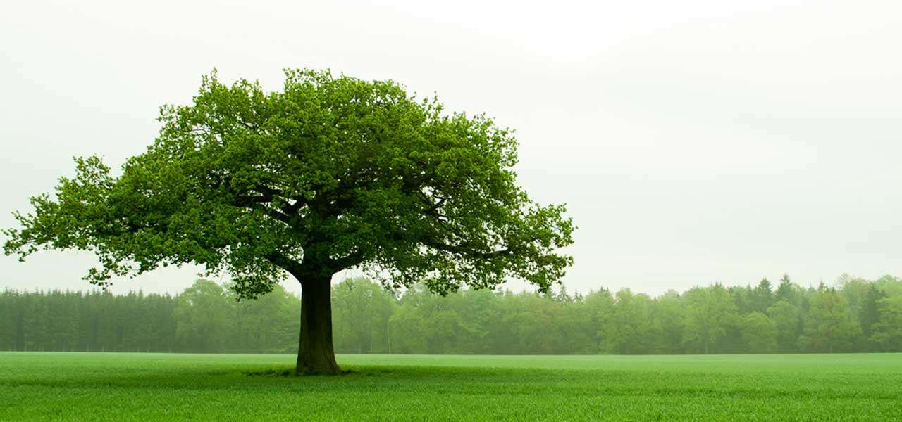 Short Paragraph on Trees – Long and Short Paragraphs on Trees