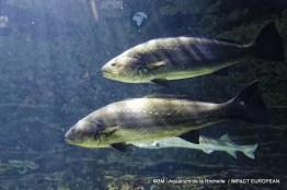 aquarium la rochelle 06