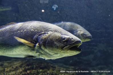 aquarium la rochelle 10