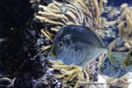 aquarium la rochelle 26