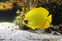 aquarium la rochelle 47