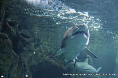 aquarium la rochelle 55