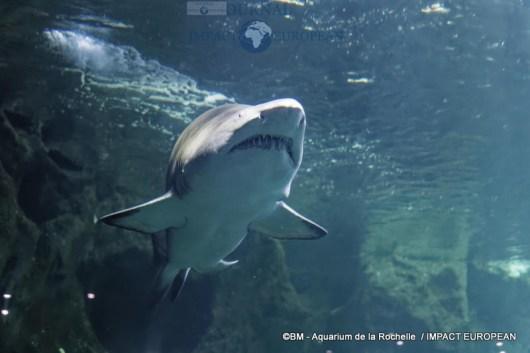 aquarium la rochelle 56