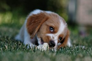 Ultimate Guide to Easy things You Can Do to Combat Animal Cruelty