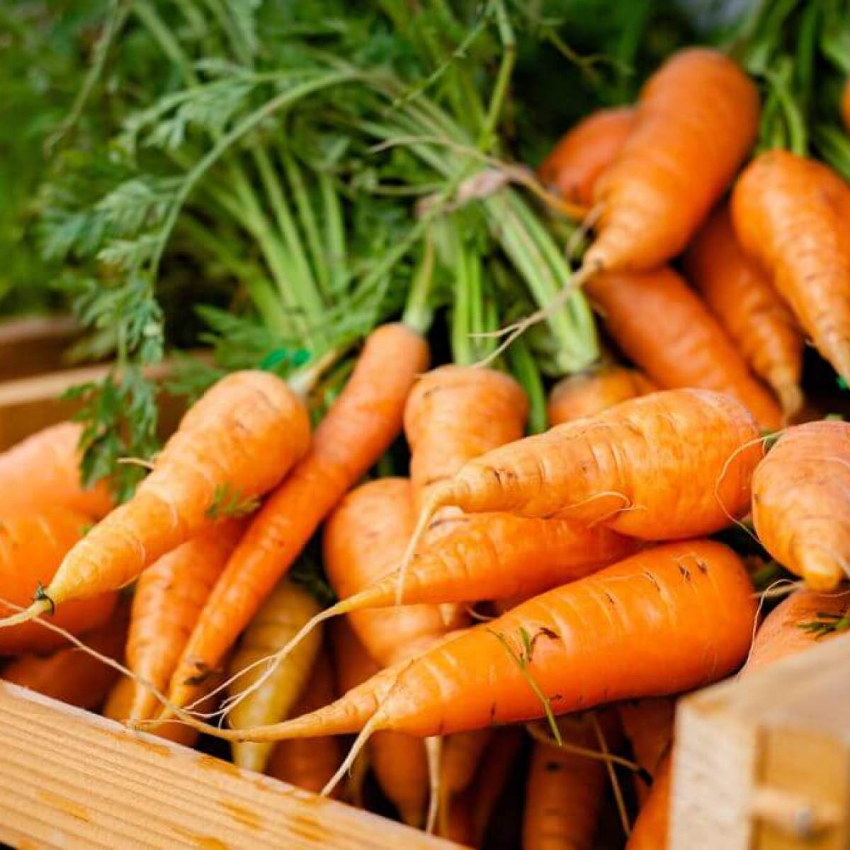 Carrots in a wooden box
