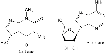 Chemical structures of caffeine and adenosine